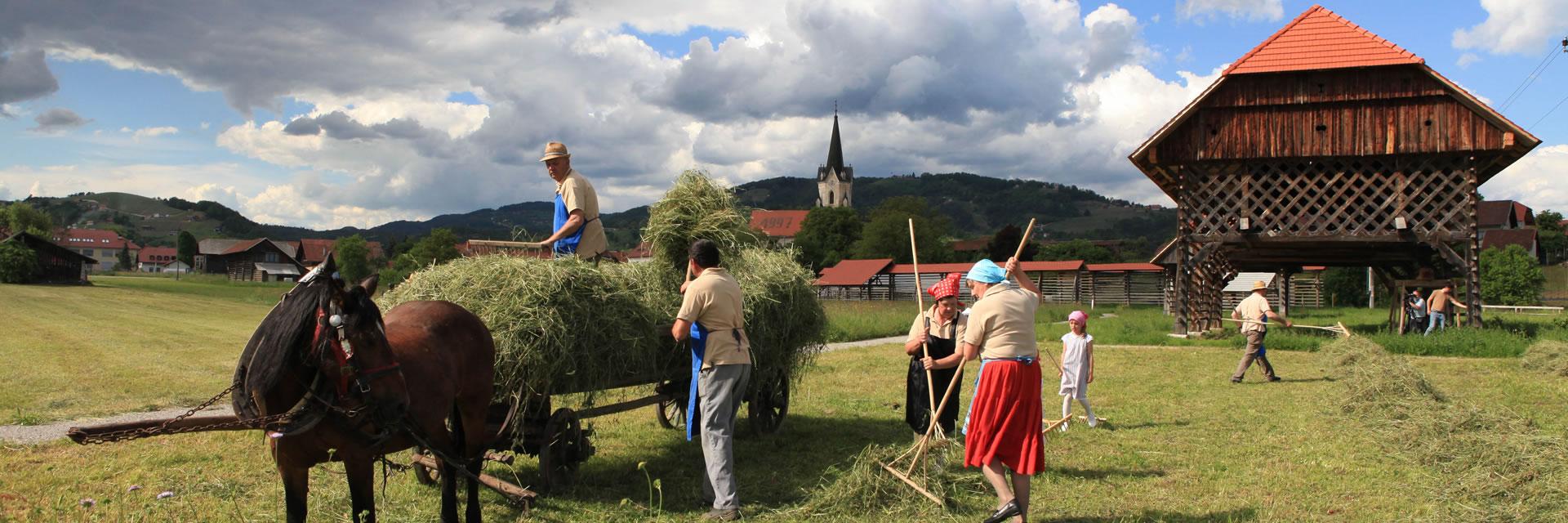 Dežela kozolcev - spravilo sena