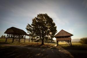 Dežela kozolcev